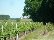 The vineyards in Anjou